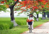 1560951833-hop-am-tuoi-hong-tho-ngay-co-intro.jpg
